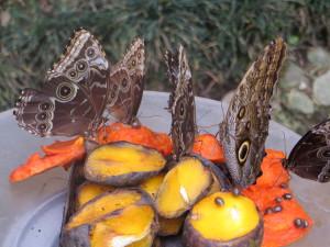 Exposición de Mariposas a la Museo Nacional de Costa Rica