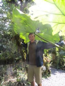 Giant leaf!